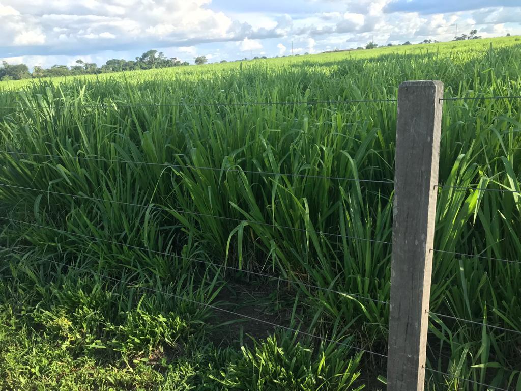 Pastagem na fazenda: manejo correto fez resultados aparecerem