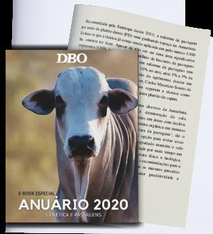 Páginas-ebook